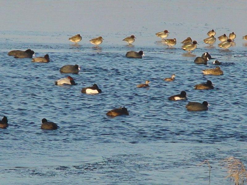 bij-de-vogelkijkhut-de-lange-duinen-noord-Middel